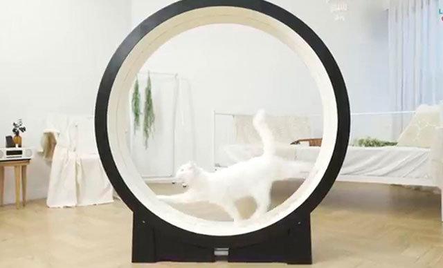The Little Cat